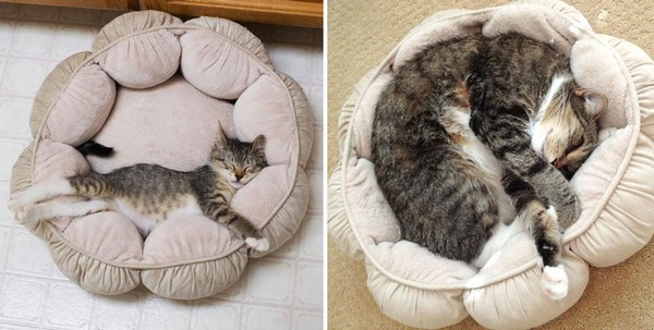 gatos antes y despues 3
