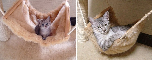 gatos antes y despues 4