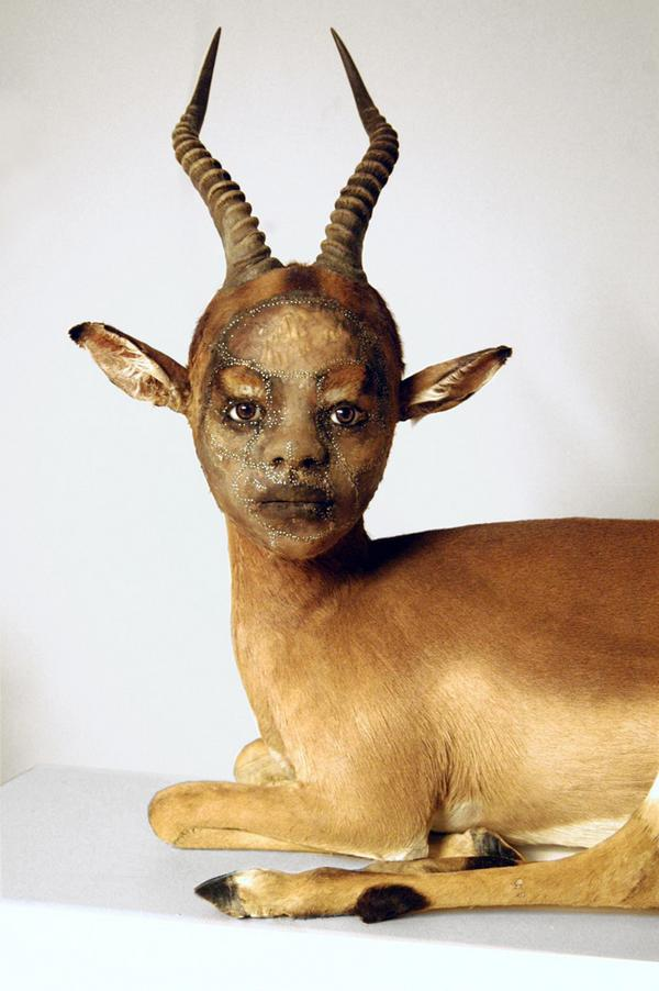 taxidermist8